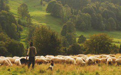 The Good Shepherd is Leading Us